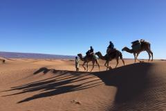 dromadaire-desert-maroc